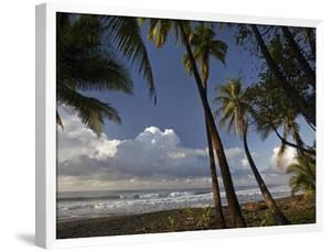 Palm trees on the beach near Marino Ballena National Park, Costa Rica by Tim Fitzharris