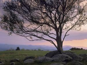 Silhouetted Tree in Doughton Park, Blue Ridge Parkway, North Carolina, Usa by Tim Fitzharris