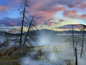 Steam Rising From Travertine Formations, Minerva Terrace, Mammoth Hot Springs, Yellowstone by Tim Fitzharris