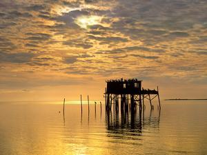 Sunset over Pelicans Perched on a Shack, Cedar Key, Florida, Usa by Tim Fitzharris