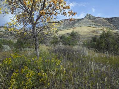 The Badlands of the South Unit, Theodore Roosevelt National Park, North Dakota