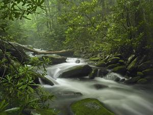 Vibrant Green Forest Surrounds Roaring Fork River, Great Smoky Mountain National Park, Tennessee by Tim Fitzharris