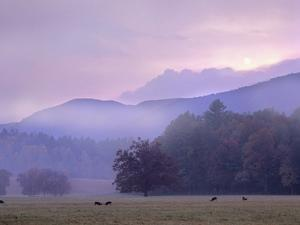 White-Tailed Deer at Cades Cove, Great Smoky Mountains National Park, Tennessee, Usa by Tim Fitzharris