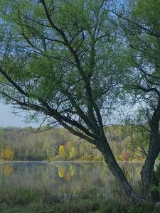 Willow Tree at Lackawanna Lake, Lackawanna State Park, Pennsylvania, Usa by Tim Fitzharris