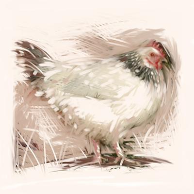 Light Sussex Hen by Tim Kahane