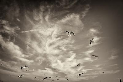 Seagulls in the Air by Tim Kahane