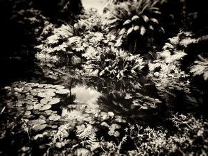 The Lost Gardens of Heligan by Tim Kahane
