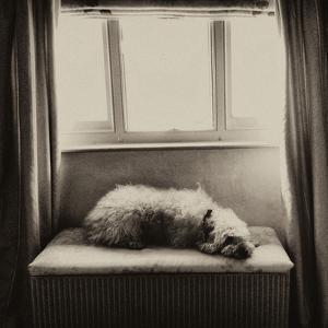 Under the Window by Tim Kahane