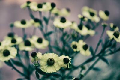 Yellow Flowers by Tim Kahane