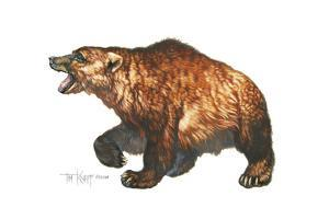 Cave Bear by Tim Knepp