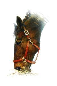 Equestian by Tim Knepp