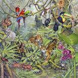 Rainforest-Tim Knepp-Mounted Giclee Print