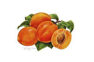 Peaches by Tim Knepp