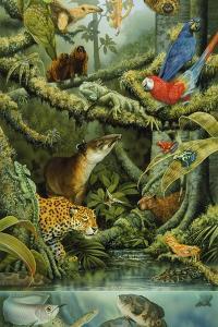 Rainforest by Tim Knepp