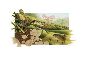 Trout Stream by Tim Knepp