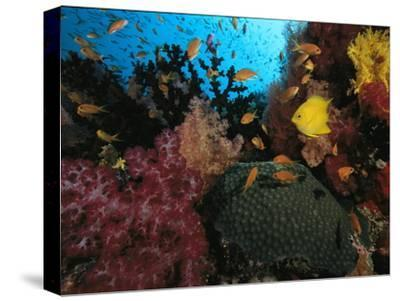 A Colorful Reef Scene with Soft and Hard Corals, and Schools of Fish