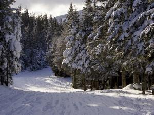 Alpine Ski Trail on Wildcat Mountain by Tim Laman