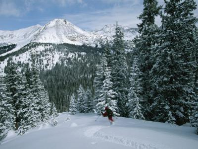 Backcountry Skiing into an Evergreen Forest