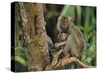 Mother and Baby Monkey Sit on a Tree Limb