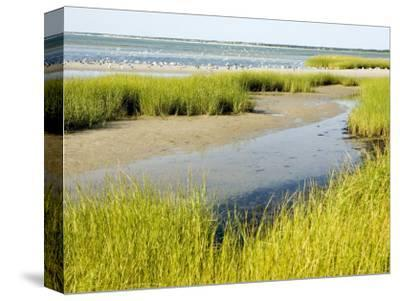 Salt Marsh Habitat with Flock of Birds Taking Off, Cape Cod, Massachusetts