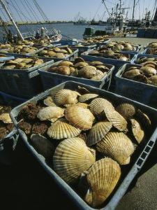 Scallop-Filled Crates Stacked on an Odaito Dock by Tim Laman