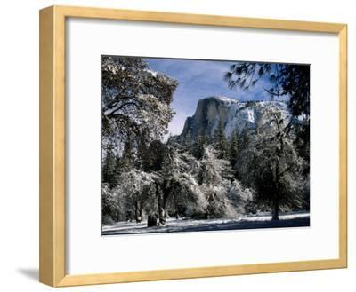 Snow-Covered Trees Frame Half Dome Mountain in California