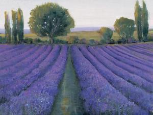 Lavender Field II by Tim