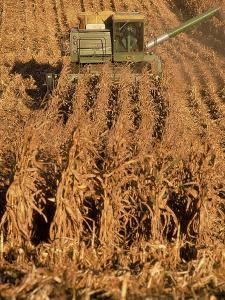 Corn Harvester by Tim Lynch