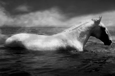 White Horse Swimming by Tim Lynch