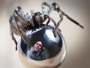 Self-Portrait with Spider by Tim Millar