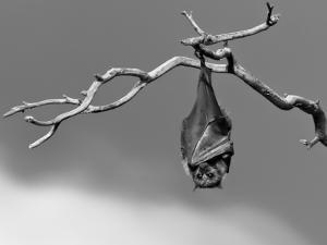 Sleepless by Tim Millar