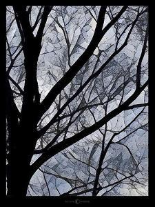 Patchwork Branches by Tim Nyberg
