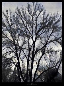 Winter Tree by Tim Nyberg