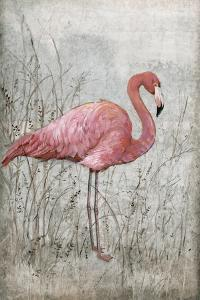 American Flamingo I by Tim O'toole