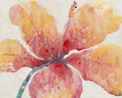Blooming Hibiscus by Tim O'toole