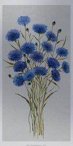 Cornflower Patch I by Tim O'toole