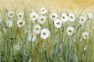 Daisy Spring I by Tim O'toole