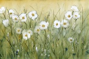 Daisy Spring II by Tim O'toole