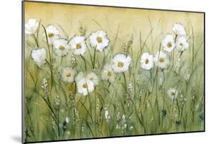 Daisy Spring II by Tim O'toole