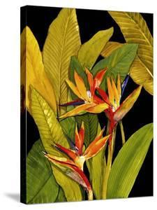 Dramatic Bird of Paradise by Tim O'toole