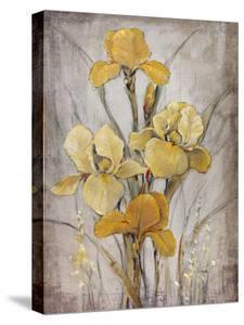 Golden Irises I by Tim O'toole