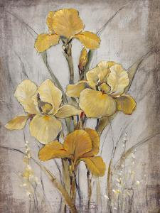 Golden Irises I by Tim O'toole