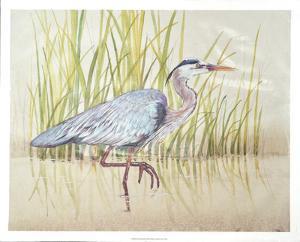 Heron & Reeds I by Tim O'toole