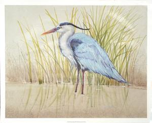 Heron & Reeds II by Tim O'toole