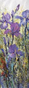 Iris Field I by Tim O'toole