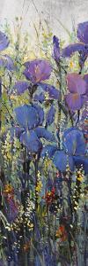 Iris Field II by Tim O'toole
