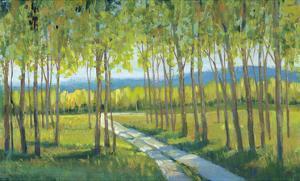 Morning Stroll II by Tim O'toole