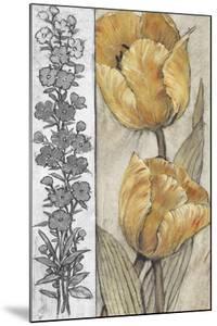 Ochre & Grey Tulips IV by Tim O'toole