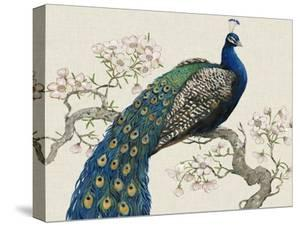 Peacock and Blossoms I by Tim O'toole