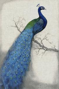 Peacock Blue I by Tim O'toole